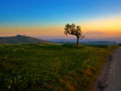 дерево, природа, trees