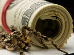 money, паук, dollar