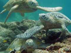 черепаха, funart