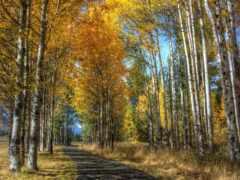 осень, дорога, aspen