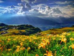 planet, цветочная, наша