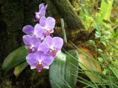 орхидея, цветы, лес