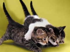 мотиваторы, everything, кошки