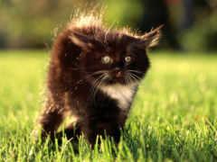 кошки, котенок, бесплатные