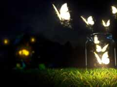 бабочка, twitter, plus