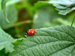 bug, lady