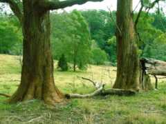 tronco, naturaleza, bosque