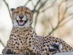 laughing, animals, фотографий