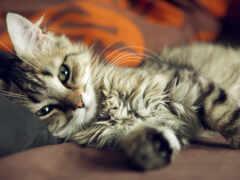 люблю, кошки, думаю