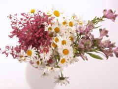 ваза, polne, цвета