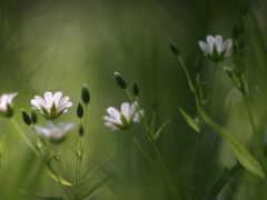 flowers, cvety, полевые