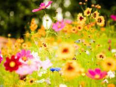цветы, природа, human
