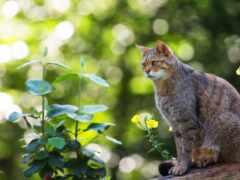кот, лес, смотреть