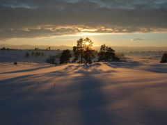 winter, природа, dark