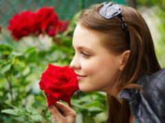 девушка, роза, природа