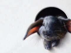 кролик, art, bunny