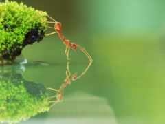 красивые, муравьев, снимки