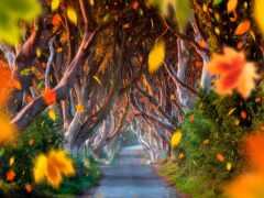 лес, лист, осень