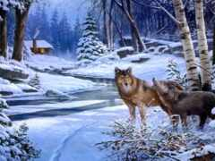landscape, winter, волк