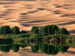 пустыне, оазис, состоящий