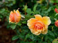 цветы, красивые, цветочная