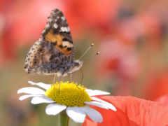 картинку, you, насекомые
