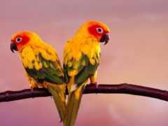попугаи, попугаев, какаду