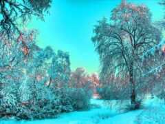 winter, красивый