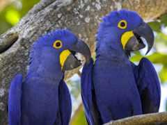 птицы, купить, попугаи