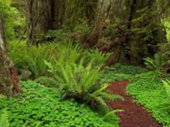 лесная, тропинка, лес