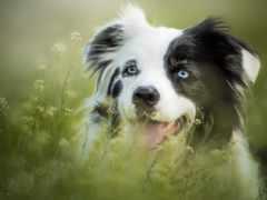 собака, spot, black