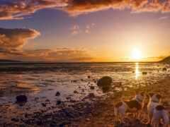 собака, побережье, море