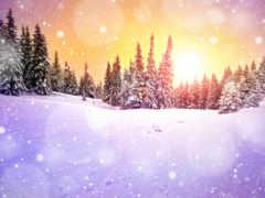 winter, снег, елки Фон № 161023 разрешение 2560x1600