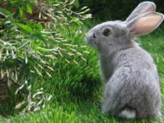 кролик, кролики, коллекция