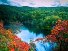 лес, природа, summer