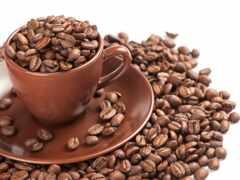seed, coffee, cup