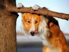 stock, animais, cão