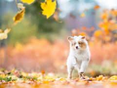leaf, собака, осень
