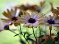 цветы, природа, поле
