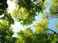 дерево, leaf, небо