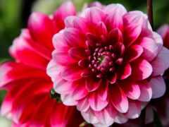 цветы, макро, цветов