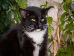 кот, serious, смотреть