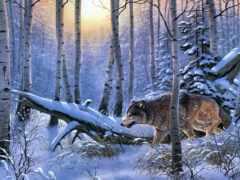 вышивка, волк, animal