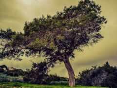 summer, дерево, облако