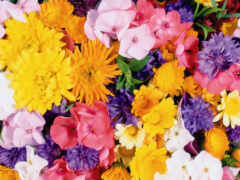 цветы, myrotvoret, oir