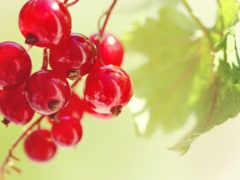 ягоды, фрукты, ягода