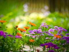 красивый, цветы, shirokoformatnyi