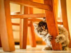 кот, под, котенок