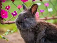 кролик, source, nero