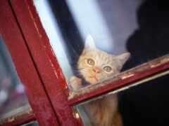 кот, лицо, смотреть